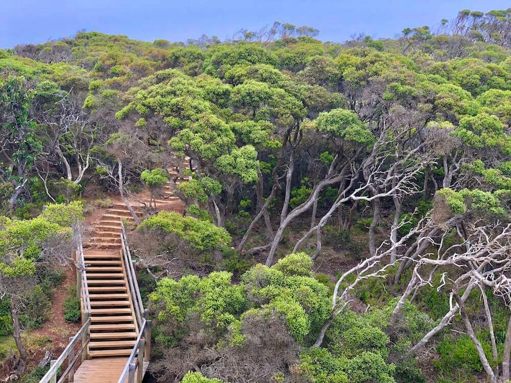 Great Ocean Road, Victoria: A pathway making its way through thick vegetation.