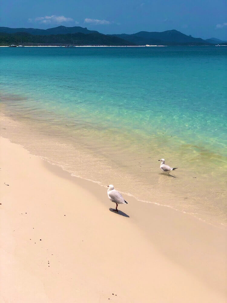 Whitsunday Island, Queensland: Whitehaven Beach contains 98.9% of pure silica which makes it unusually cool to walk on.