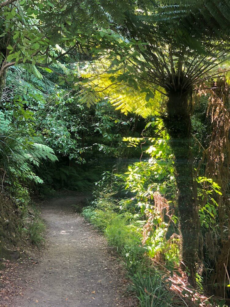 Queen Charlotte Track is the easiest trail we have had. You can see how tropical the vegetation around here is.